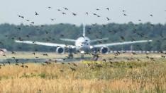 Otonom drone'lar kuşları havalimanlarından uzak tutabilir